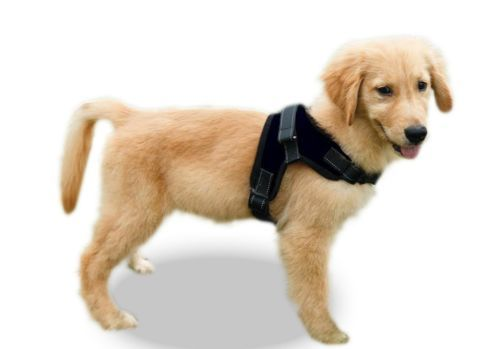 Details About Service Dog No Pull Harness Reflective Pet Puppy