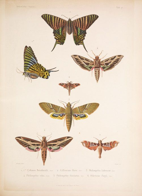 CUBAN BUTTERFLIES