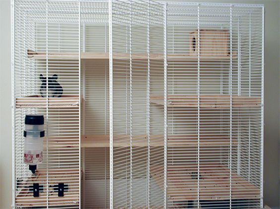 Multi Level Bunny Cage How Do You Keep A Chinchilla