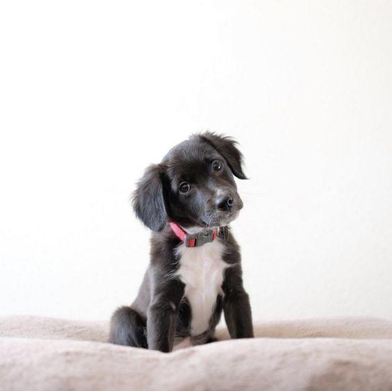 Diversos estudios confirman que los perros son más inteligentes de lo que imaginábamos