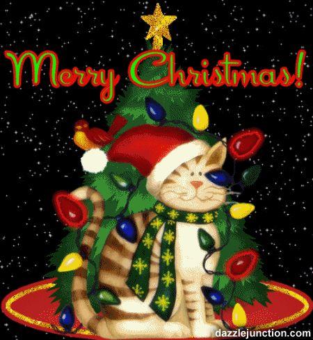 so cute christmas kitty with flashing lights