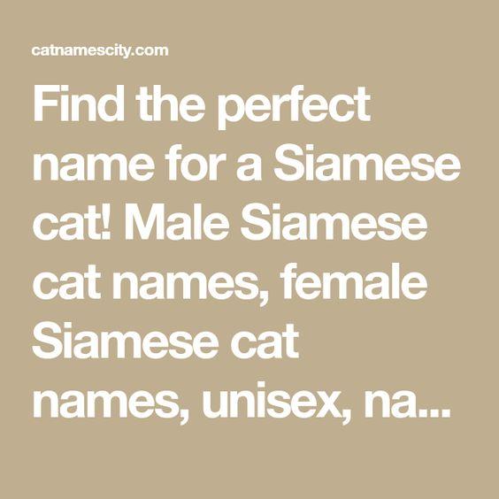 Siamese Cat Names Siamese Cats Cat Names Cute Cat Names