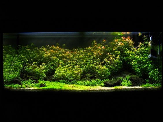 planted aquarium aquascaping and landscapes on pinterest. Black Bedroom Furniture Sets. Home Design Ideas