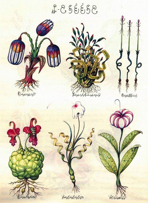 Luigi Serafini - Codex Seraphinianus botanical illustrations