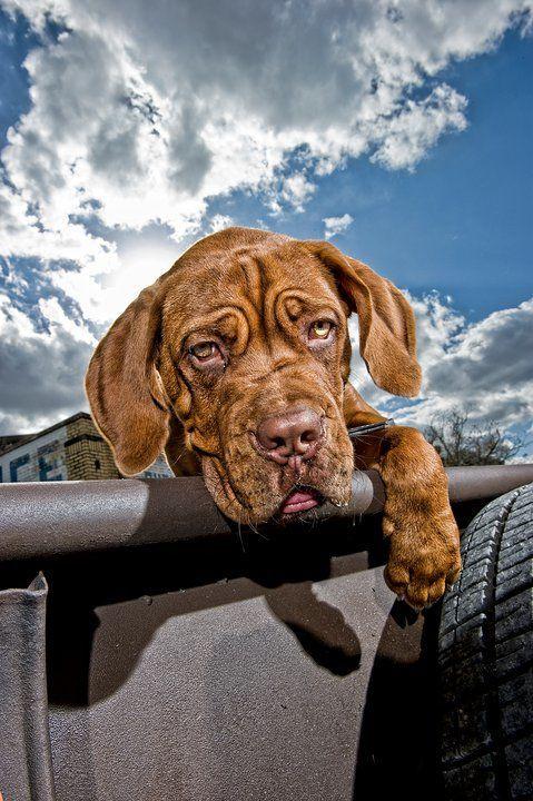 Tânia, só para ti que adoras cãozinhos :)