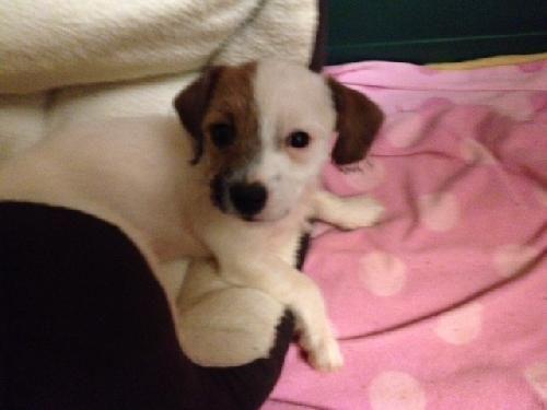 adopt me!!