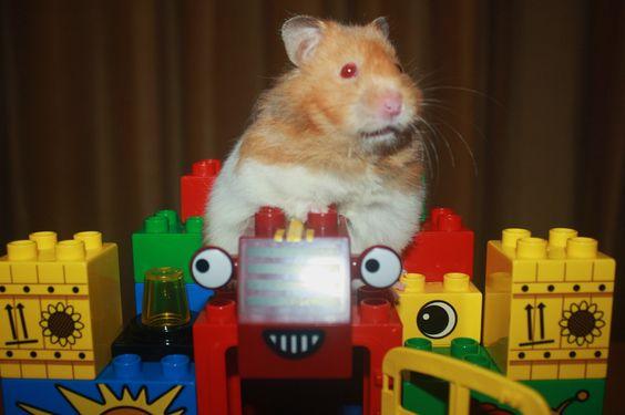 Eros a 007 hammy secret agent page 21 hamster central - Hamster agent secret ...