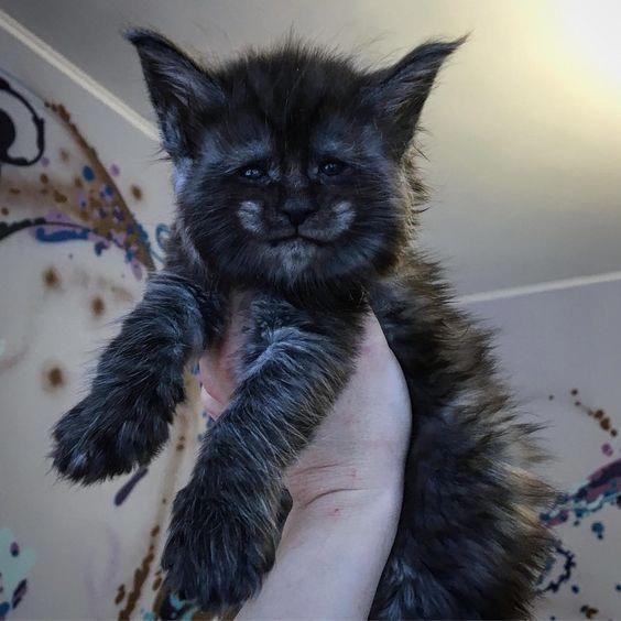 Catscatscats Hashtag Instagram Posts Videos Stories On Webstaqram Com In 2020 Cute Animals Beautiful Cats Cute Cats