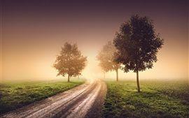 Morgen, Nebel, Dunst, Bäume