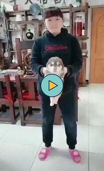 cachorrinho gigante