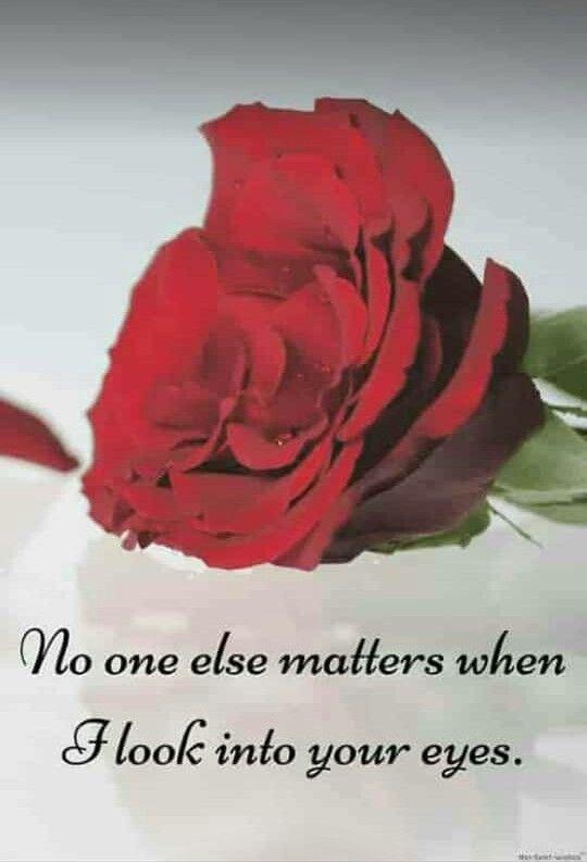 Pin By Safiya On True Words Morning Love Quotes Good Morning Flowers Good Morning Love