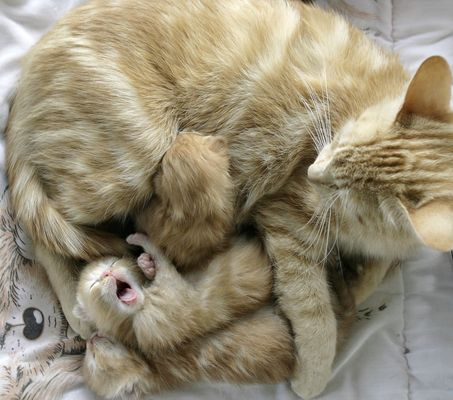mom and kittens