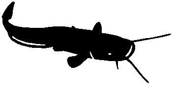 stickers poissons pour zlook et atomistickers peche silure de dessus decoration bateau par autocollant poisson