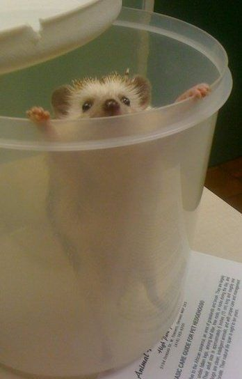 Why is there a hedgehog in my cup? Oh who cares, it's adorable <3: