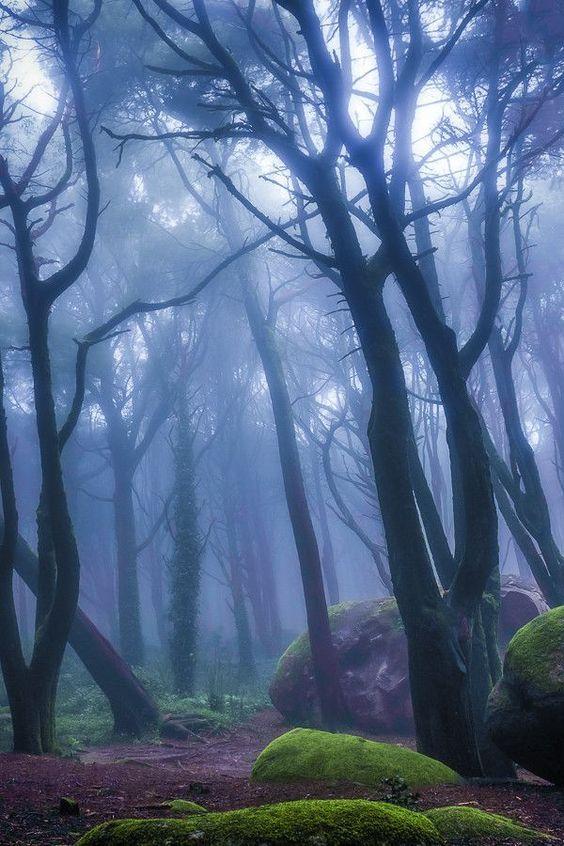 Peninha Magical Forrest, in Sintra, Portugal