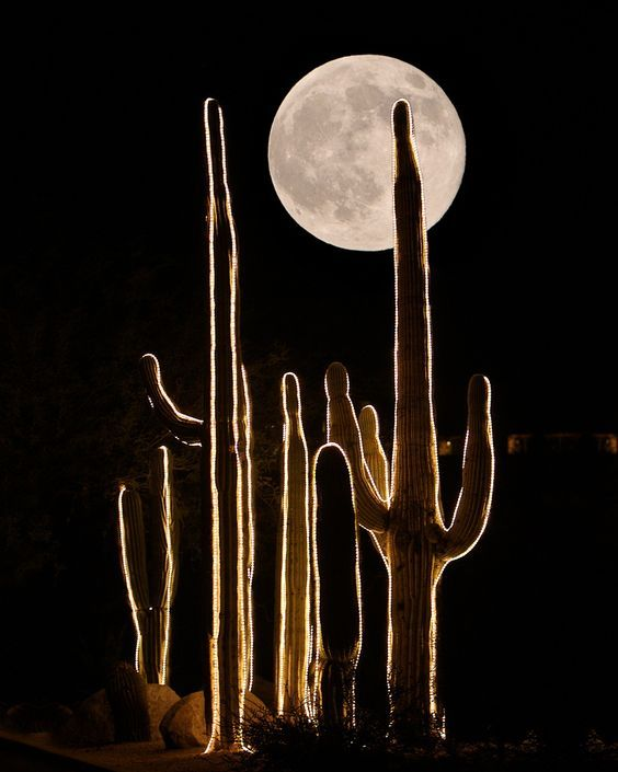 wasbella102:     Cactus Moon  Photo by Guy Atchley     ❤️