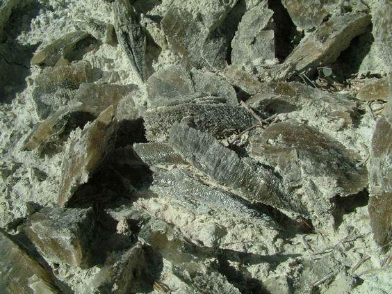 Historia y Evidencias geológicas en el Altiplano  D6e4de0dea7667be89b360147379ddd5