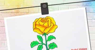 Paling Keren 30 Gambar Bunga Mawar Video Cara Mudah Menggambar Bunga Mawar Videos Matching Cara Membuat Mawar Biru Dan Hi Gambar Bunga Ilustrasi Bunga Bunga