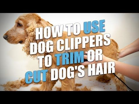 How To Use Clippers To Trim Your Dog S Hair Dog Clippers Dog Grooming Clippers Dog Haircuts
