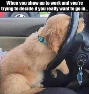 Feature Funny Animal Memes Funny Pictures Funny Dogs