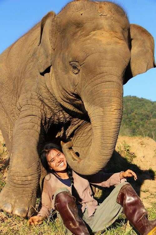 URGENT: WHERE CAN I SIGN UP FOR ELEPHANT CUDDLES?!