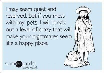 i may seem quiet and reserved, but if you mess with my pets, i will break out a level of crazy that will make your nightmares seem like a happy place.