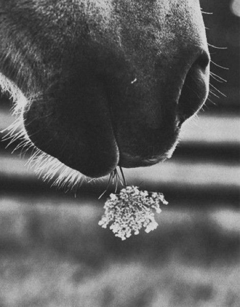 ,#horse with #flower too cute