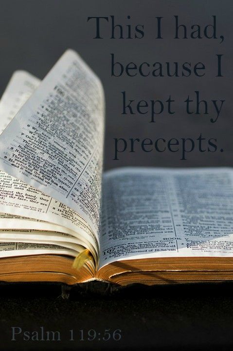 Psalm 119:56 (KJV) This I had, because I kept thy precepts. | Bible  scriptures, Psalm 119, Psalms