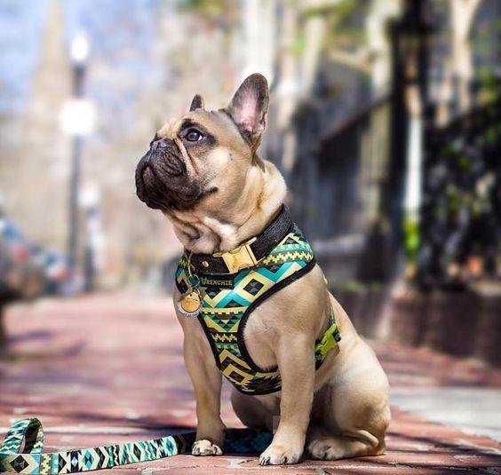 dog イヌ 犬可愛い画像まとめ http://ift.tt/1XzCZAb