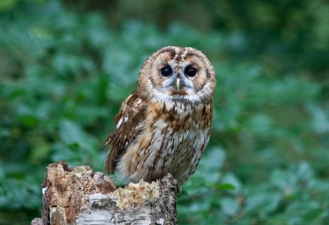 Owls Change Color to Cope With a Changing Climate