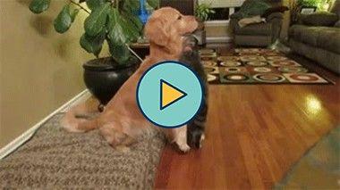 cachorro e gato são bons amigos