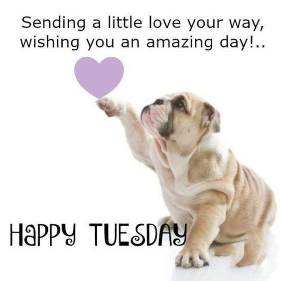Top 20 Tuesday Memes Positive Personajewelries Tuesday Quotes Good Morning Happy Tuesday Quotes Tuesday Humor