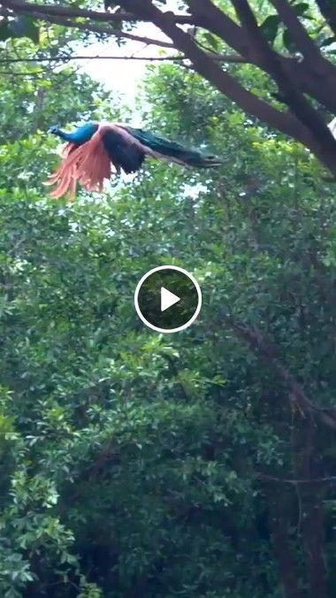 Como é belo  a natureza ver os pássaro voando
