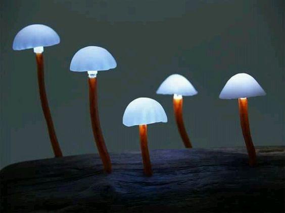 Bioluminescent mushrooms...these look like mini lamps!!!!!