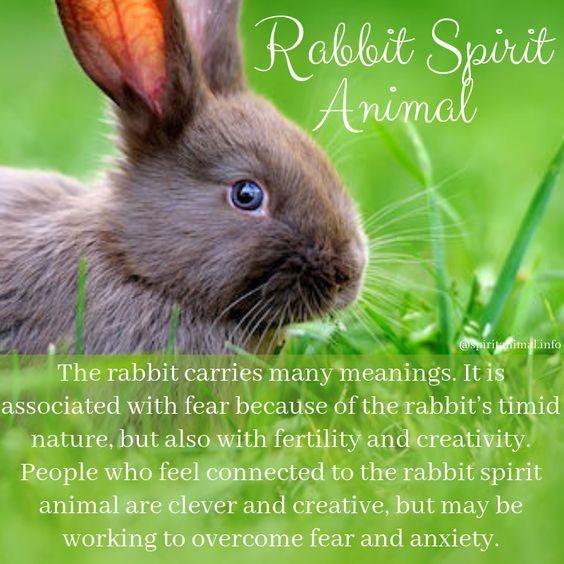 Animal rabbit power Rabbit Physiology
