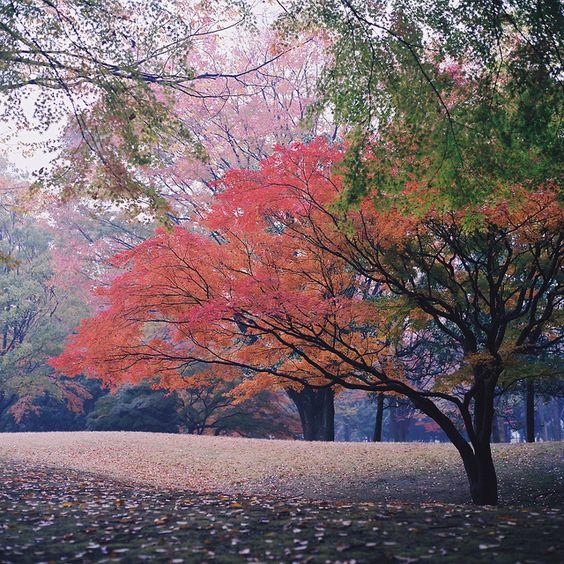 #autumn tokyo