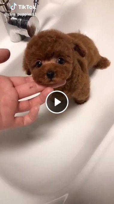Cachorrinho fofinho recebendo carinho