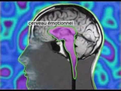 http://www.surlechemindesoi.com - Une vidéo du Dr.David Servan-Schreiber  pour comprendre le mécanisme du stress et son origine dans notre cerveau emotionnel