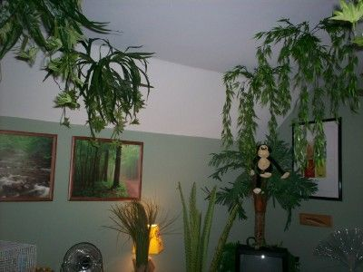 fake plants hanging from ceiling kids decor ideas pinterest ceilings rainforests and. Black Bedroom Furniture Sets. Home Design Ideas