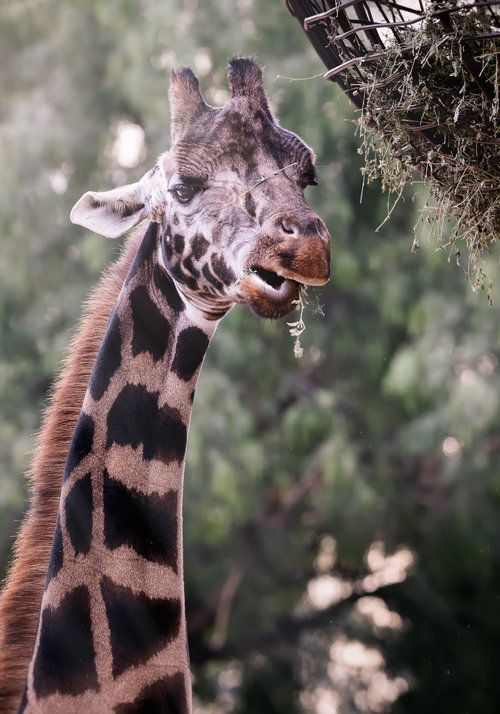 Paul Tadday Photography Melbourne Pet Portraits Melbourne Zoo