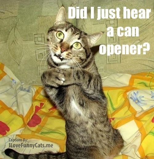 Did I hear a can opener?