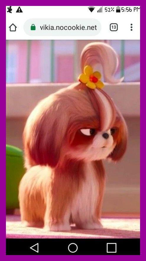 Daisy Shih Tzu Tiffany Haddish La Vida Secreta De Las Mascotas Ganseblumchen Shih Tzu Tiffany Haddish Gehe Secret Life Of Pets The Secret Of Pets Secret Life