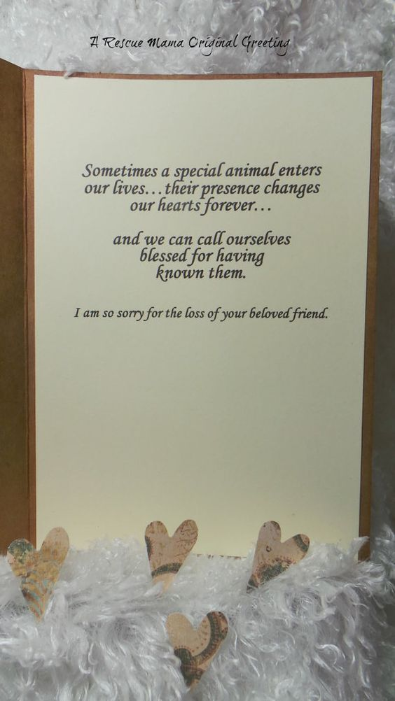 Sympathy Card Cat Sympathy Card Cat Bereavement by TheRescueMama