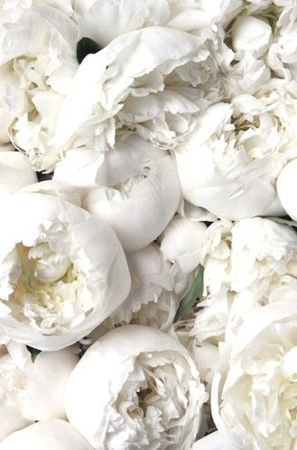 ❖Blanc❖ #White #peonies wedding #bouquet