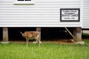 Visiting Cades Cove is one of the best things to do in the Smokies with kids