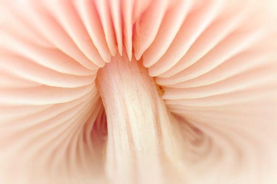 Photographer Peter Baas ~ underside of a pale pink mushroom :)