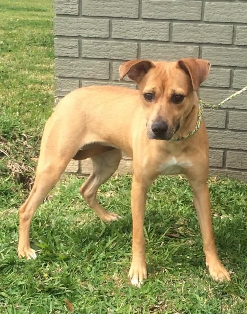 Adopt Mandy On Help Terrier Mix Dogs Pets