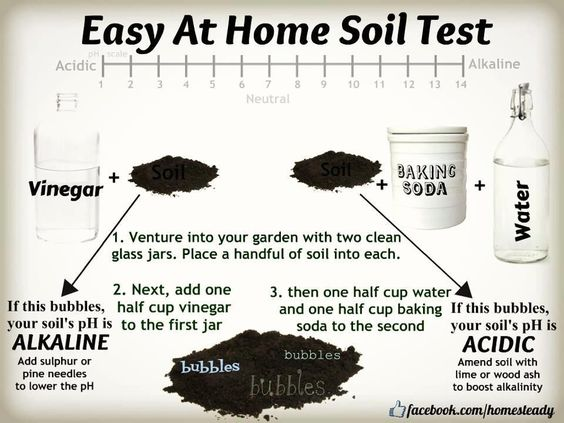 A simple home soil test