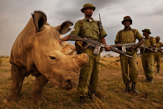 Asian Rhino Protection Units - Google Search