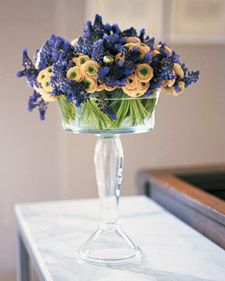 Even short stems stand tall when placed in a lofty glass compote. Here, brilliant violet Muscari latifolium and tight blooms of Ranunculus get a boost in a lush, dense display.